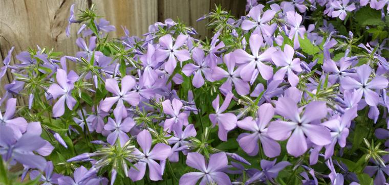 flowers_slider