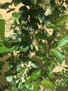 edible native plants madison wisconsin