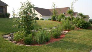 rain garden with native plants