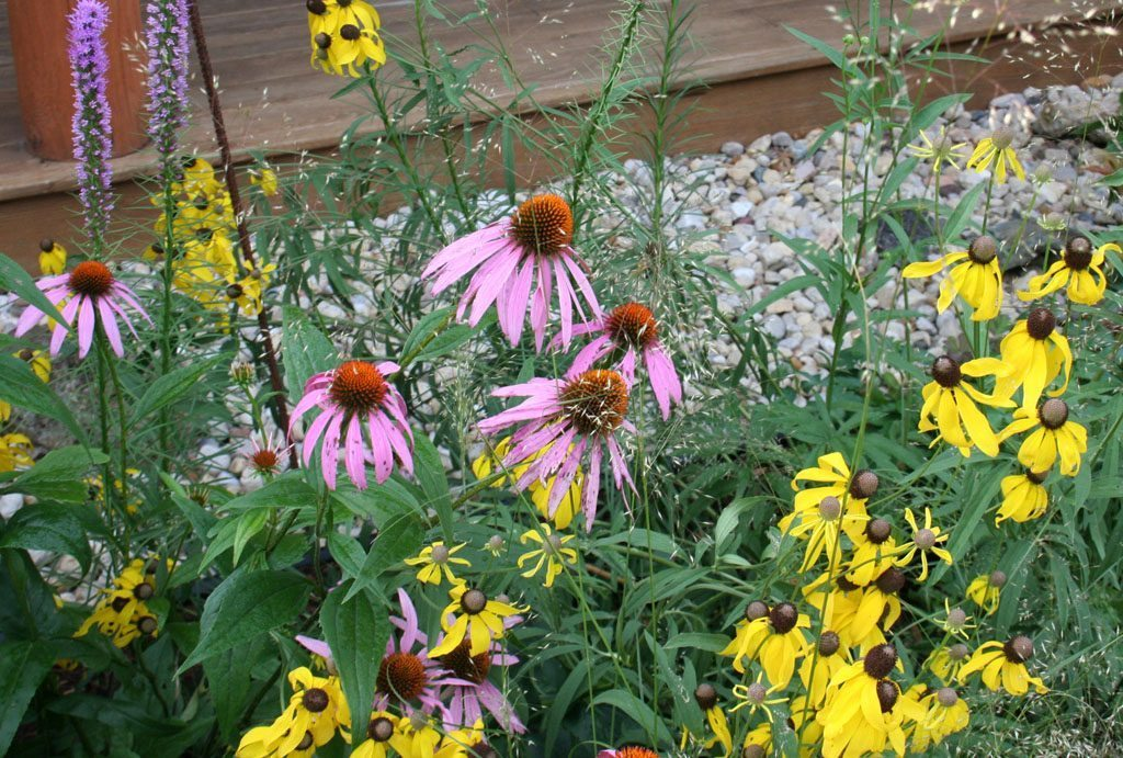 dickinson_residence_native_flowers_albany_wi.jpg