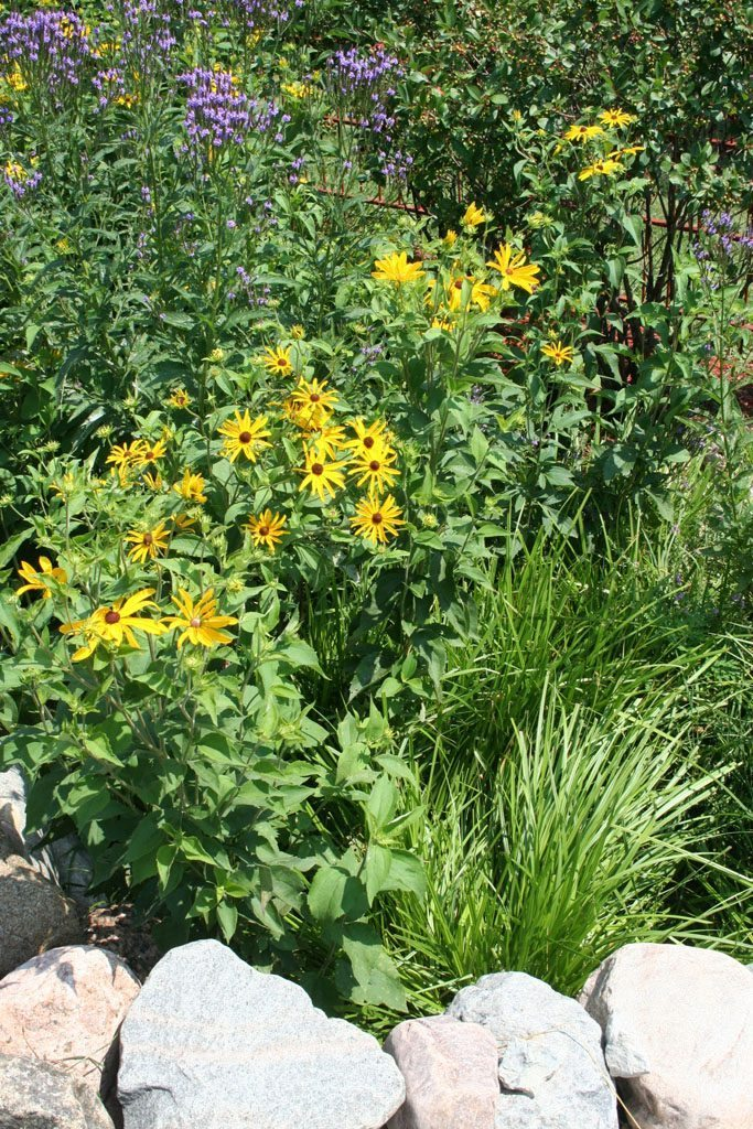 kundert_residence_native_plants_monroe_wi