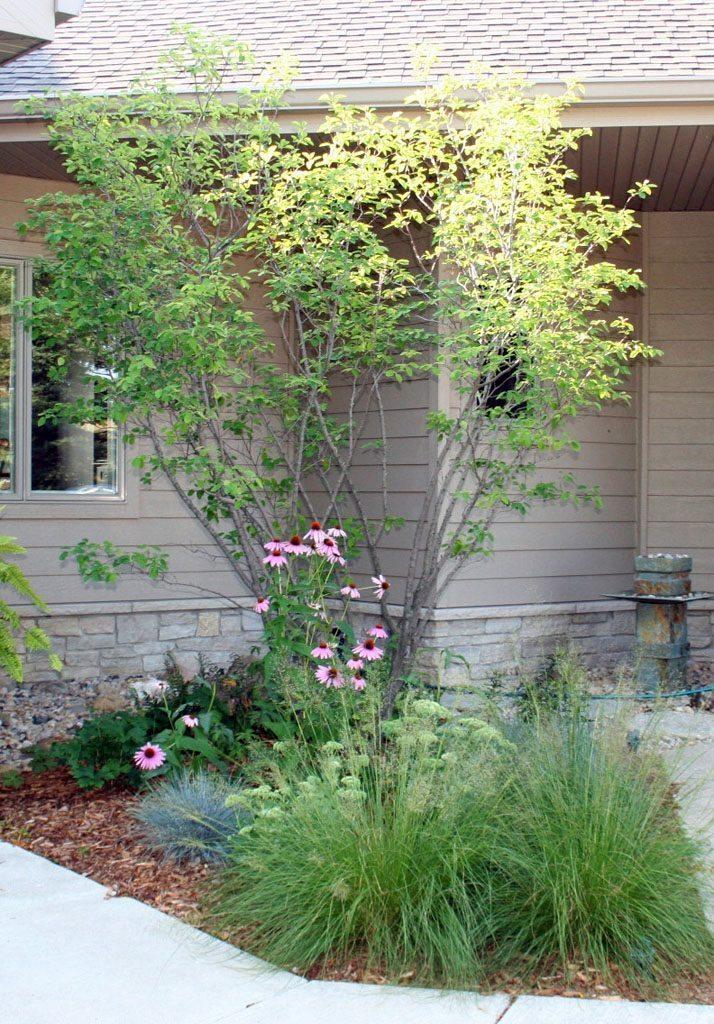 larson_residence_planting___fountain_verona_wi
